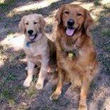 S Joey & Hank 72