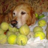 S Joey & Tennis 72